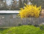 BackYard_YellowBush
